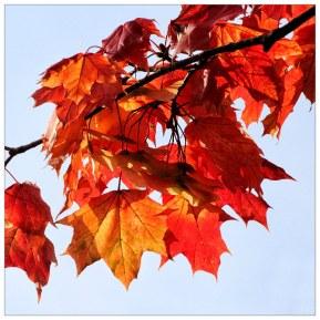 Herbstimpressionen Oktober 3 – 365tageasatzaday