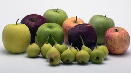 Stillleben Äpfel Birnen | 365tageasatzaday
