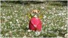 Engel Blüten Gänseblümchen | 365tageasatzaday
